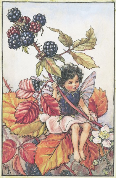 blackberries fairies